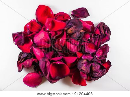 Wilting Closeup Of Red Rose Petals