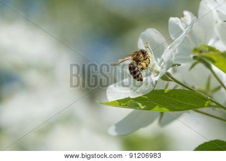 Bee Melliferous