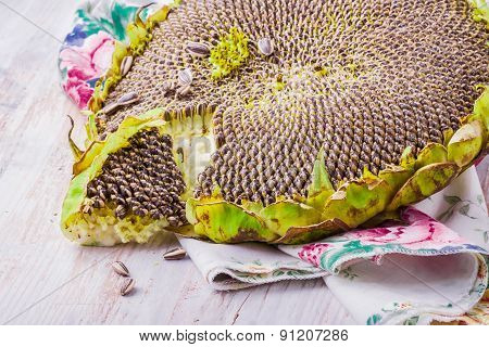 Seeds Of Ripen Sunflowers