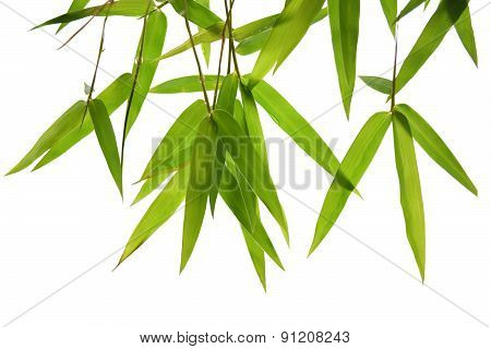 green bamboo leaves and branches isolated on white background Die cutting