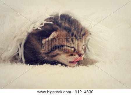 Little Kitten Sleeping In The Bedspread