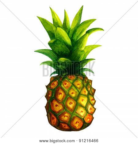 Realistic watercolor illustration pineapple isolated on white background vector