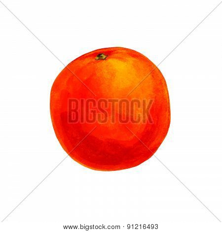 Realistic watercolor illustration orange isolated on white background vector