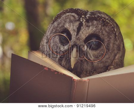 Owl In Glasses Reading Old School Book