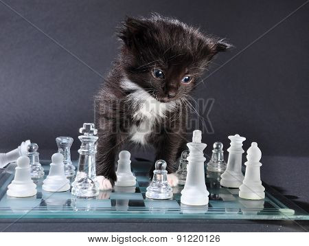 Kitten Glass Chess Board With Falled Pieces