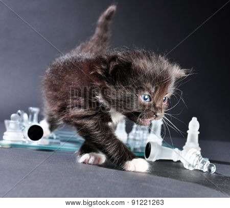 Kitten On Glass Chess Board With Pieces