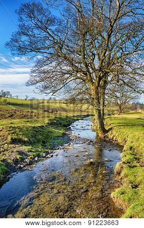 Bare tree standing beside a small stream.