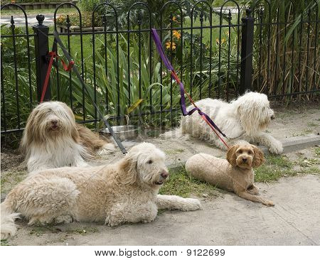 four dogs waiting for the master