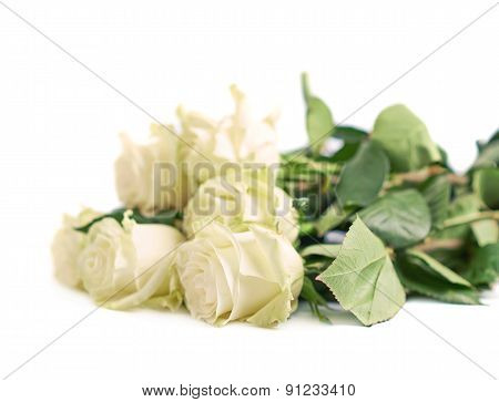 Pile of white roses isolated
