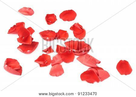 Surface covered with rose petals