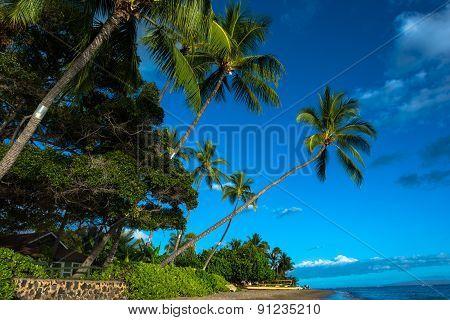 Lahaina beach, Maui
