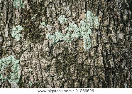 Tree Bark Texture, Tree Bark Background