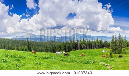 Meadow With Horses In The Carpathian Mountains