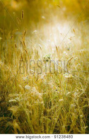 Meadow Illuminated By Sunlight.