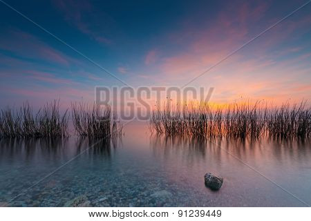 grass in lake gardasee at colorful rted blue sunset