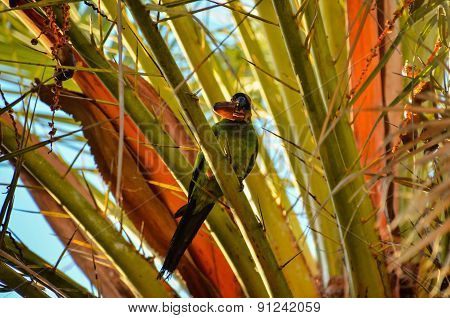 Parrot Tropical Bird