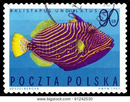 Vintage  Postage Stamp. Undulate Triggerfish.