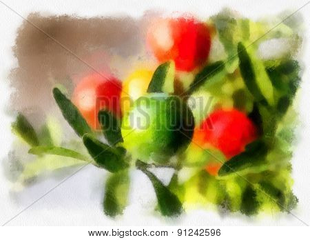 Nightshade berries, solanum pseudocapsicum