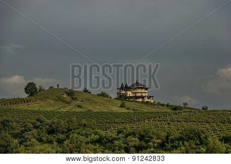 Vineyard in Melnik town area