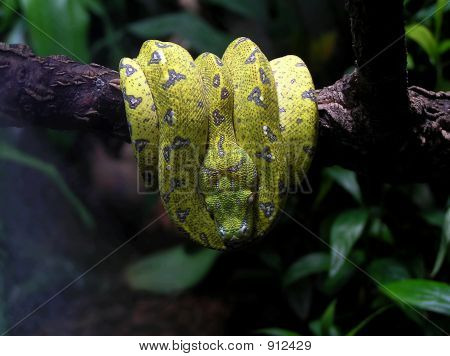 Snake Yellow On A Branch