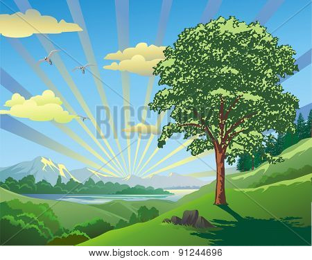 Landscape - Tree On The Hill 21 [