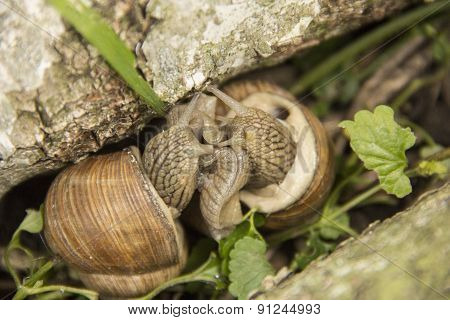 Two Little Snails Are On The Nature