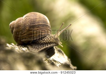 The Little Snail Crawling On A Tree On A Green Background