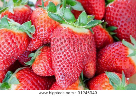 Many delicious red strawberries with green leaves