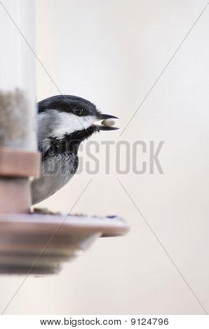 Chickadee bird on feeder
