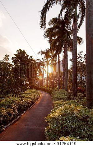 Sunset In Gardens At The Bay, Singapore. Sun Lights Through Palm Trees On Walking Road.