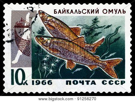 Vintage  Postage Stamp. Baikal Omul.