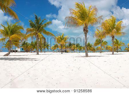 Palm trees on the white sand. Playa Sirena. Cayo Largo. Cuba.