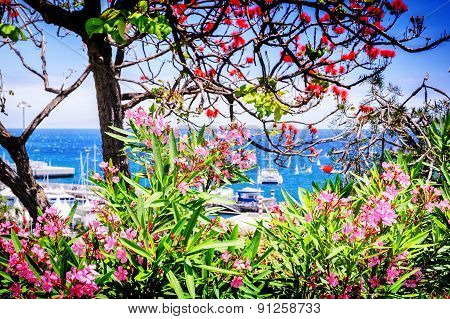 View Of Funchal Port Through The Blooming Flowers. Madeira