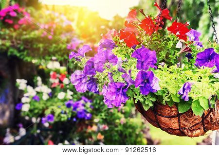 Colorful Petunias In Hanging Flowerpot