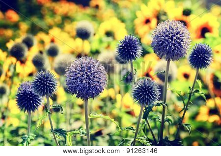Summer Field With Echinops