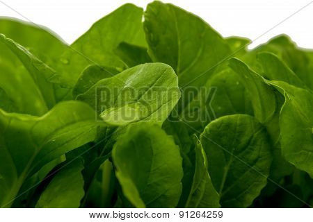 Seedlings Of Chinese Cabbage Leaves Isolated White Background