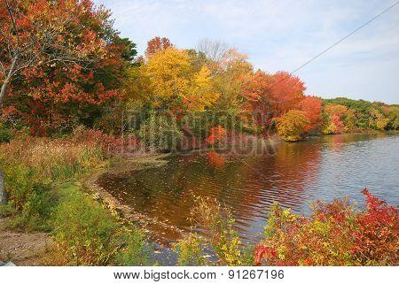 Colorful Cove