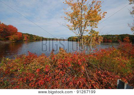 Reservoir Landscape