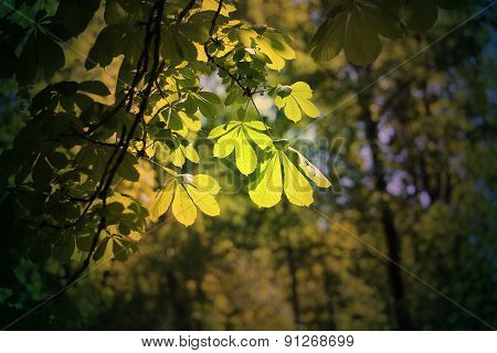 Beautiful Green Leaves Of The Tree