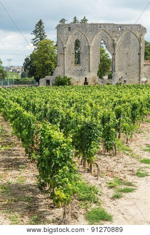 Vines and Ruins in St. Emilion