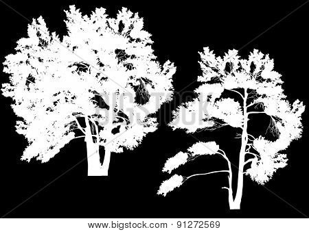 illustration with two white pine silhouettes isolated on black background