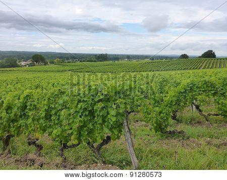Landscape of Sauternes
