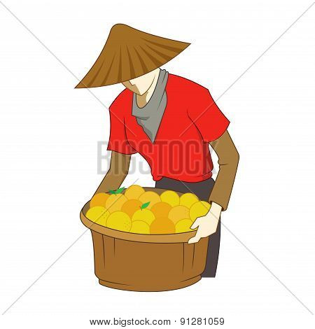 Farmer Harvesting Oranges
