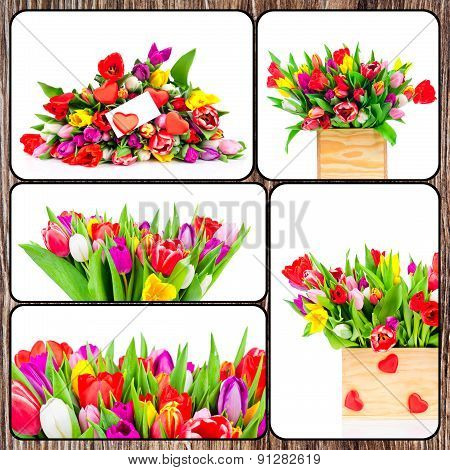 Set of tulips pictures