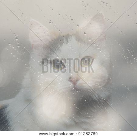 Double Exposure Of The Cat