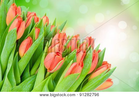 Tulips flowers on green background