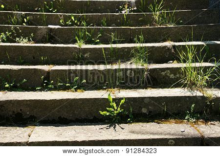 stairs and grass