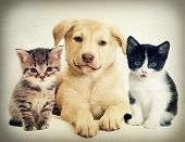 picture of puppy kitten  - kitten and puppy  in a retro style - JPG