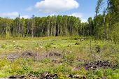 stock photo of deforestation  - Woods logging  stump after deforestation hack woods - JPG