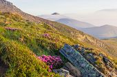 picture of mountain-range  - View of the mountain range with a with grass flowers and rocks in the foreground during dawn - JPG